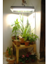 Eclairage horticole