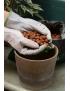 Pots, bacs et substrats