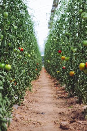 BOTA N'CO : votre growshop sur Orleans. Un grand choix, de petits prix.
